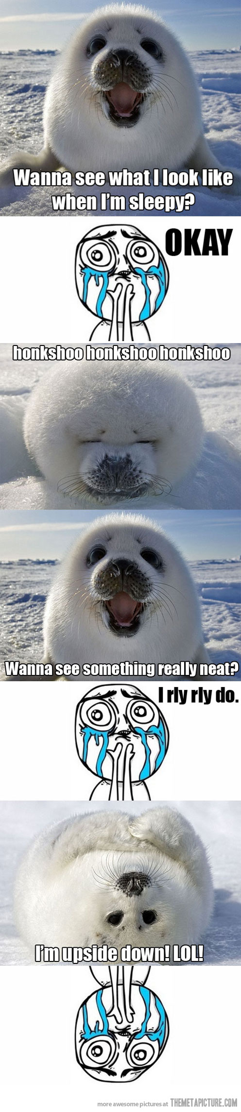 funny-seal-arctic-snow-cute