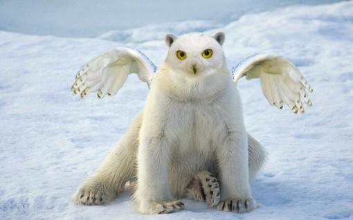 Snowy-polar-owl